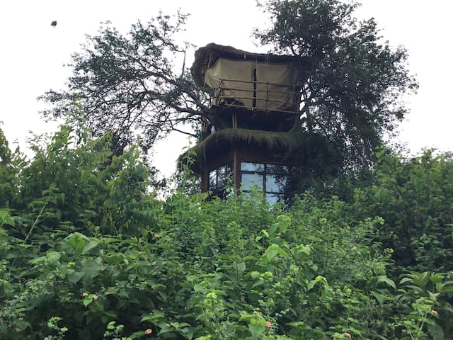 Olago Bay Tree House Experience