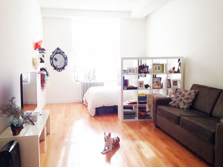 View of the living room/bedroom area (dog not included)