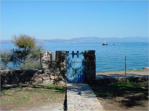 Casa à beira-mar entre oliveiras