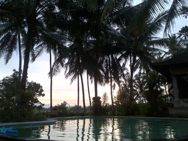 pool surround by coconut tree