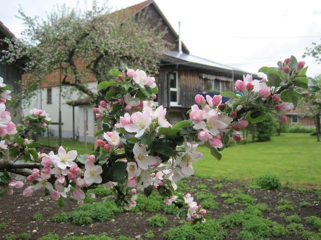 renoviertes altes Bauernhaus - Wutach - Dům