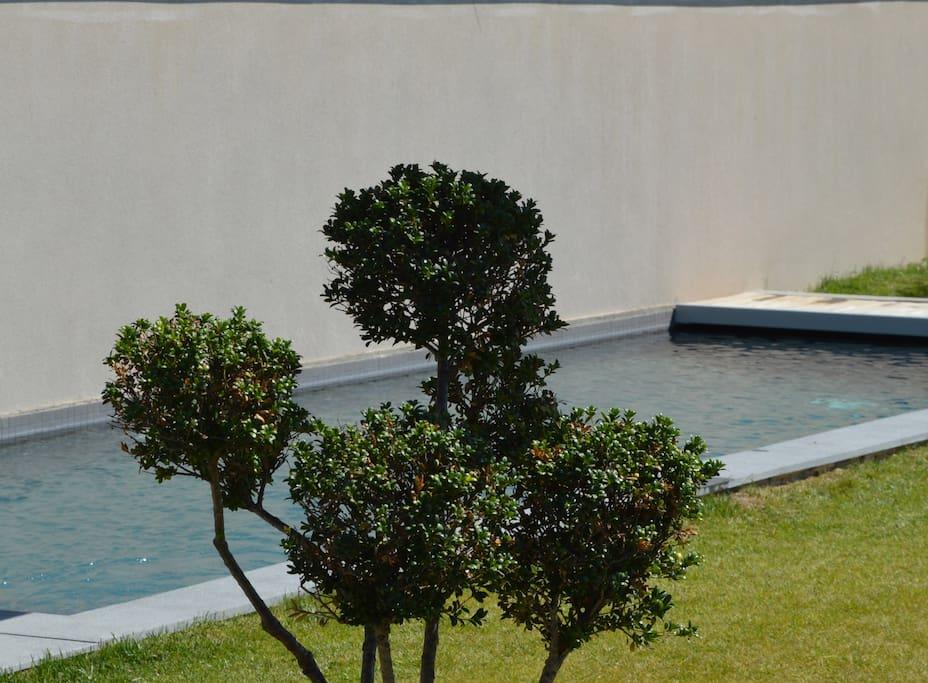 Jardin 2ème plan (piscine et spa)