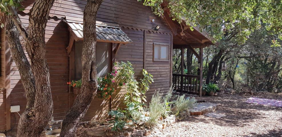 Naomi's Cabin