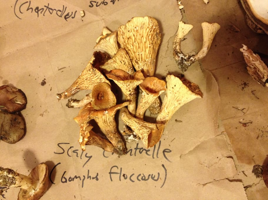 This is mushroom foraging heaven. We know the best places to go! (actual mushrooms foraged by Airbnb guests!)