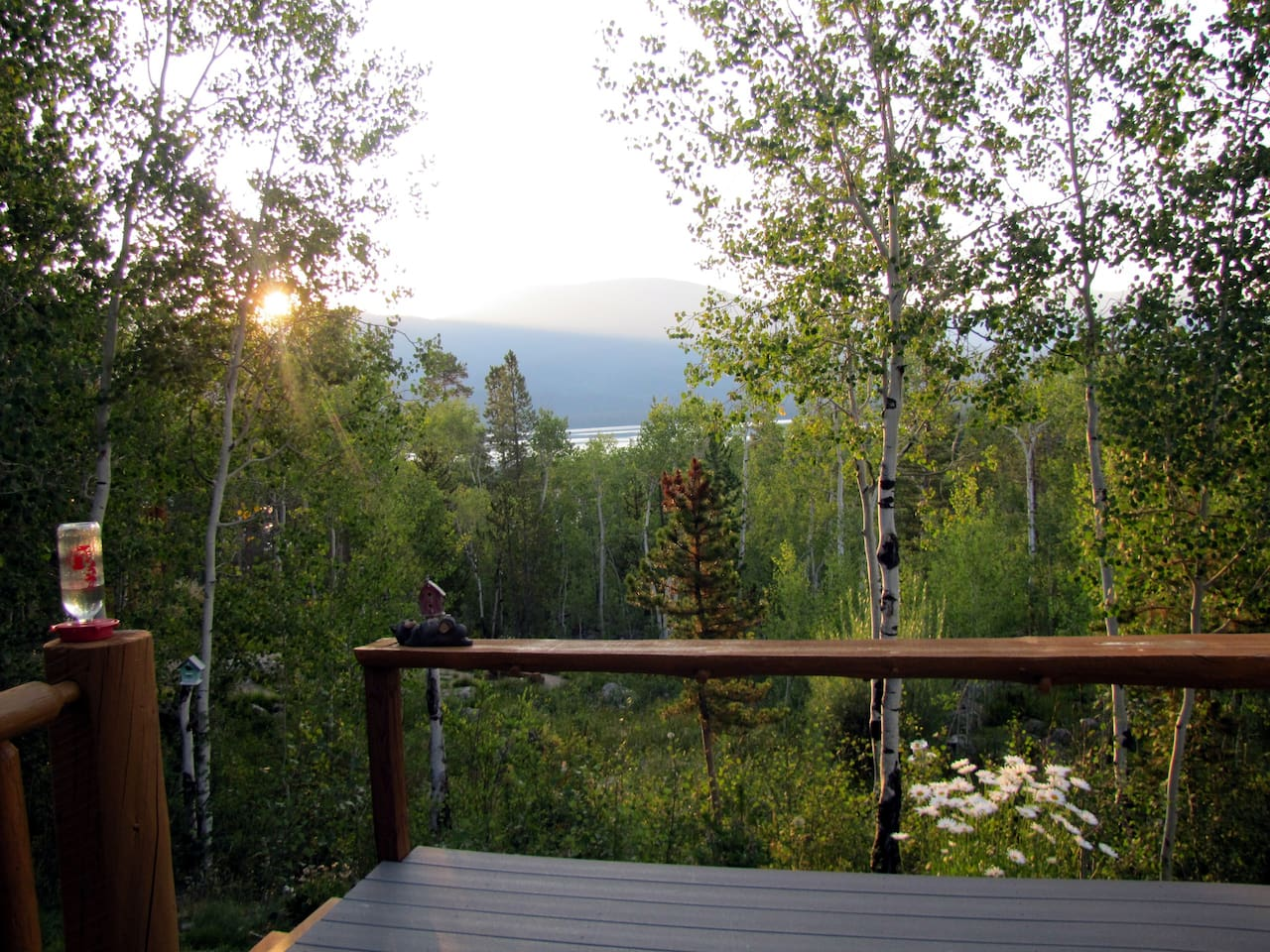Summer mornings from the deck