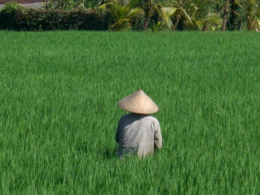 Local farmer resting in the heat of the day.