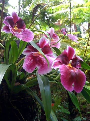 orchid growing in tree fern
