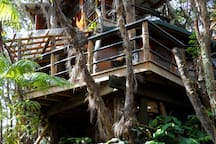 back view of treehouse