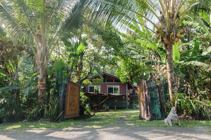 Tropical Tree House and Studio Canopy near Pahoa