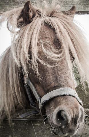 Mini paardje  Lover Boy