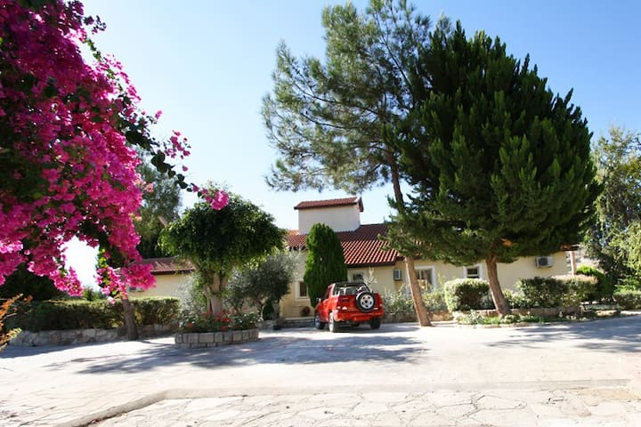 Alonia Villas - Pissouri - Haus