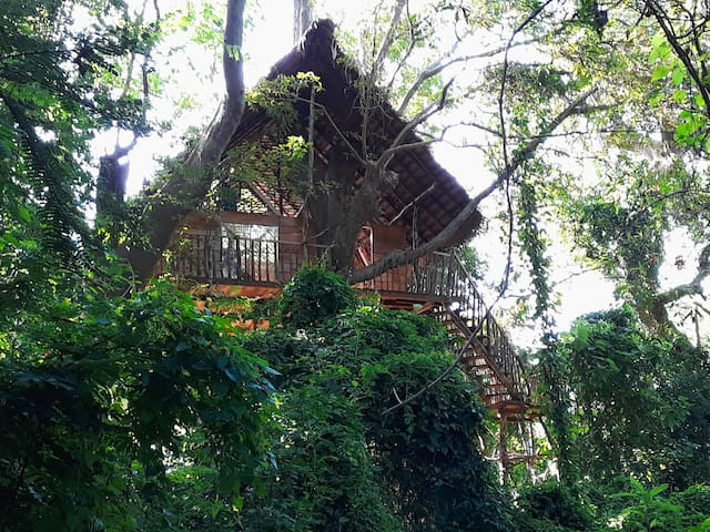 Tree Tops Aswaenna (Tree House)