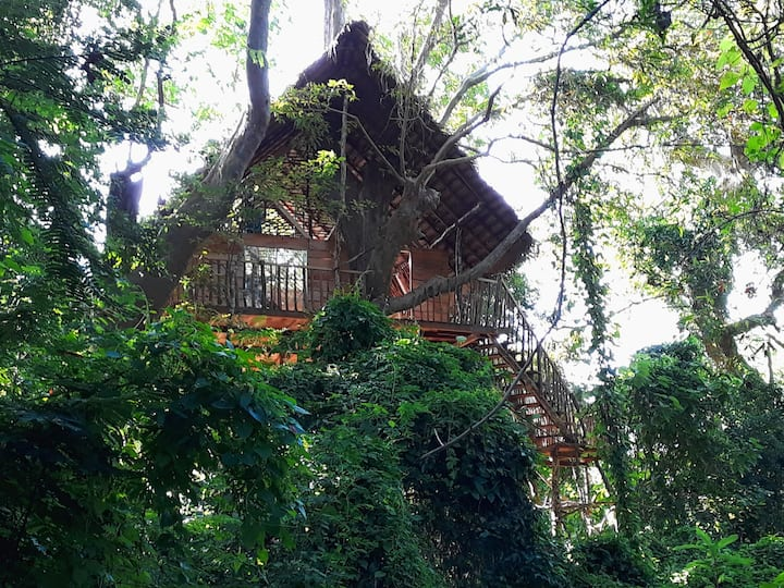 Tree Tops Aswaenna (Tree House)