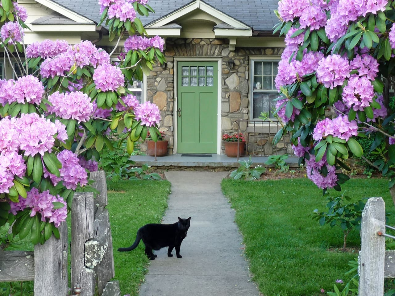 Jim the cat invites you in the front door of the stone cottage.
