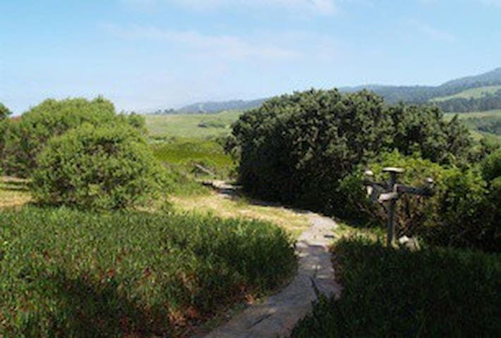 Pathway to lower garden
