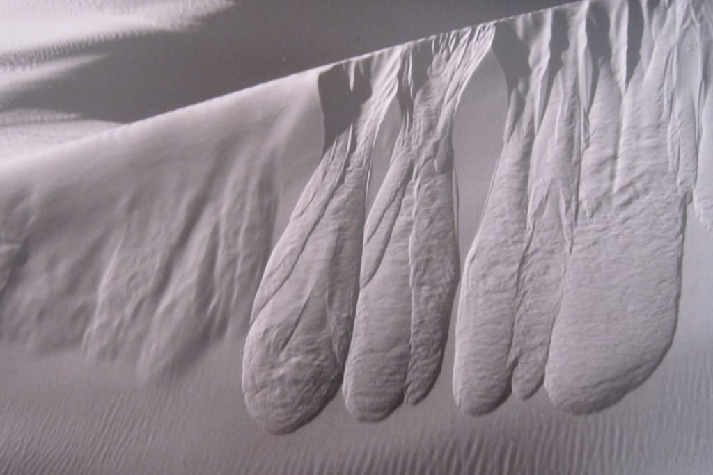 Our amazing sand dunes some of the highest in the world!