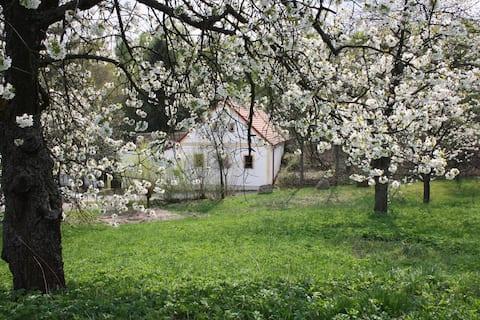 fijne woonboerderij grote tuin, kind vriendelijk