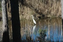 A white egret fishes in the canal - photo taken from the deck