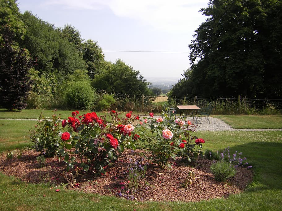View over part of the garden