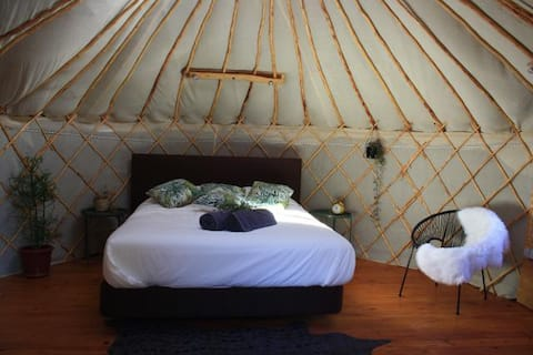 Yurt in orange grove