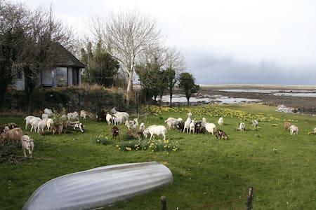 Harbourhillhouse Goatfarm - Ballyvaughan - Hus