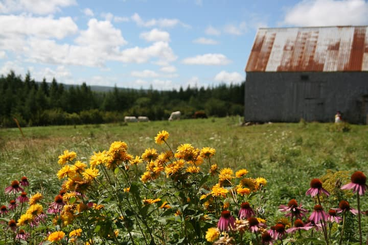 Room for rent on Organic Farm