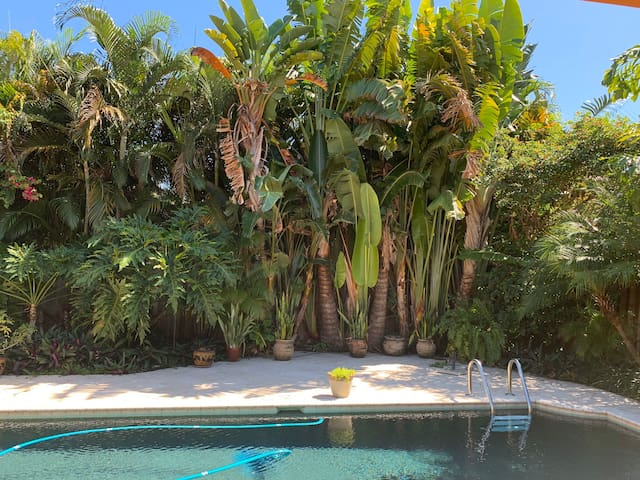 Private Tropical Oasis in Safety Harbor!