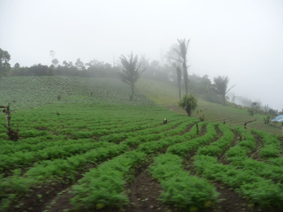 Tomohon, is 30 minutes drive away