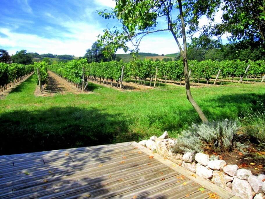 Le deck en bois au milieu des vignes face aux coteaux