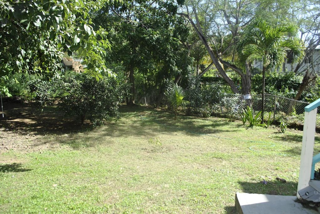 Back yard, private lot with huge trees