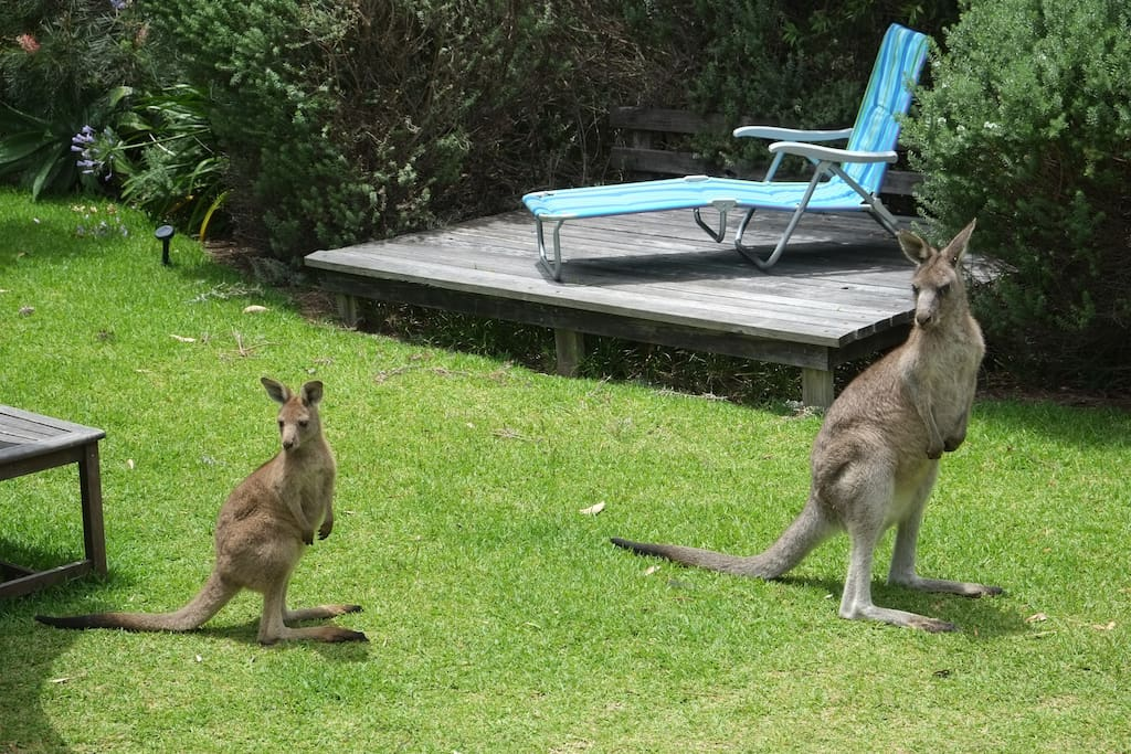 Locals in the backyard
