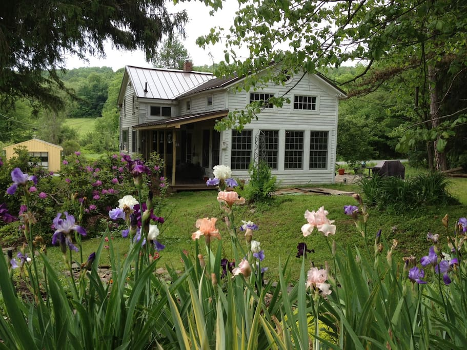 Irises and kitchen wing
