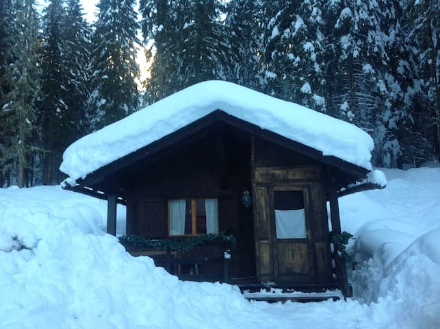 Wonderful chalet in the forest! - Malga Ciapela - Blockhütte
