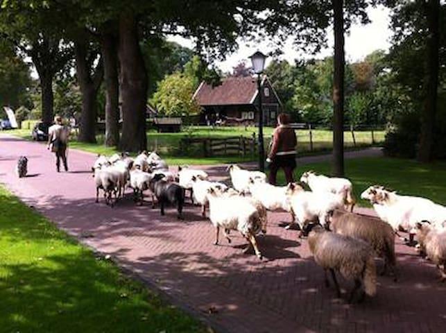 Vakantiehuisje 'De Kapschuur' - Zweeloo - Cottage