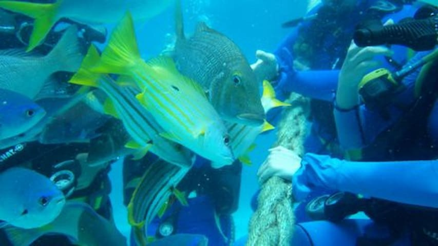 Diving with the fish on the Great Barrier Reef