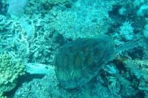 A beautiful turtle.