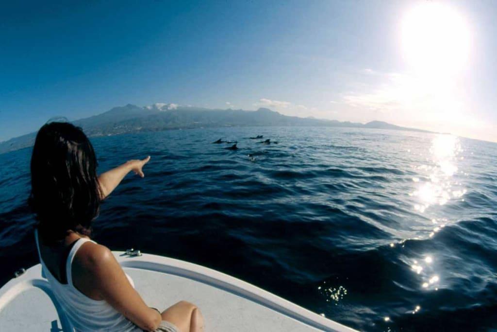 Surroundings - Whale watching