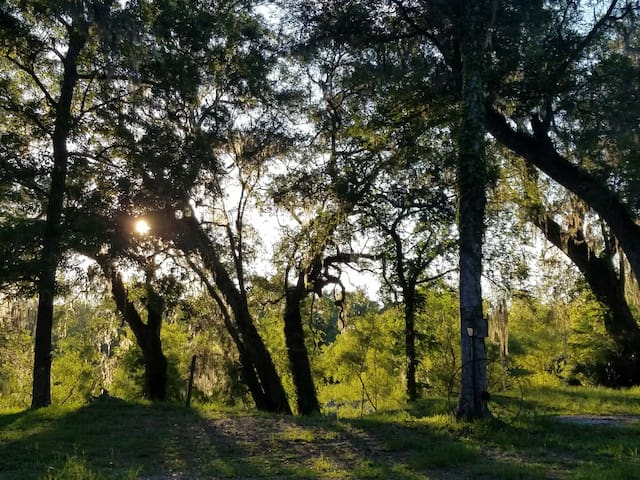 Primitive Camping Site on the Suwannee