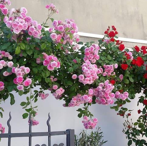 Il roseto da Sonia (puro Relax di campagna)