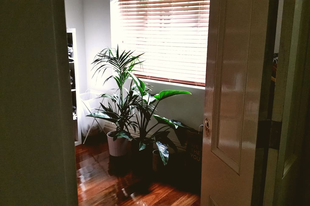 Plants throughout bedroom