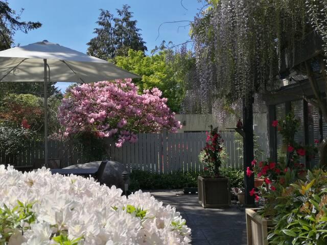 温哥华尊贵西区邻UBC紫藤花园