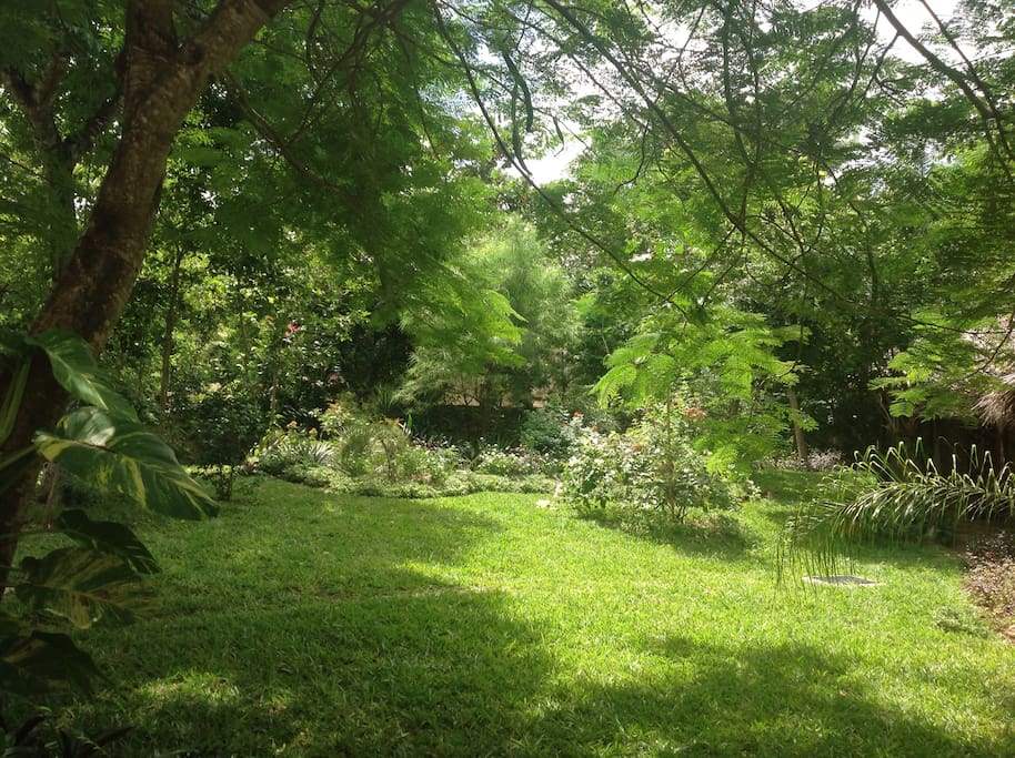 Lush lush stunning garden