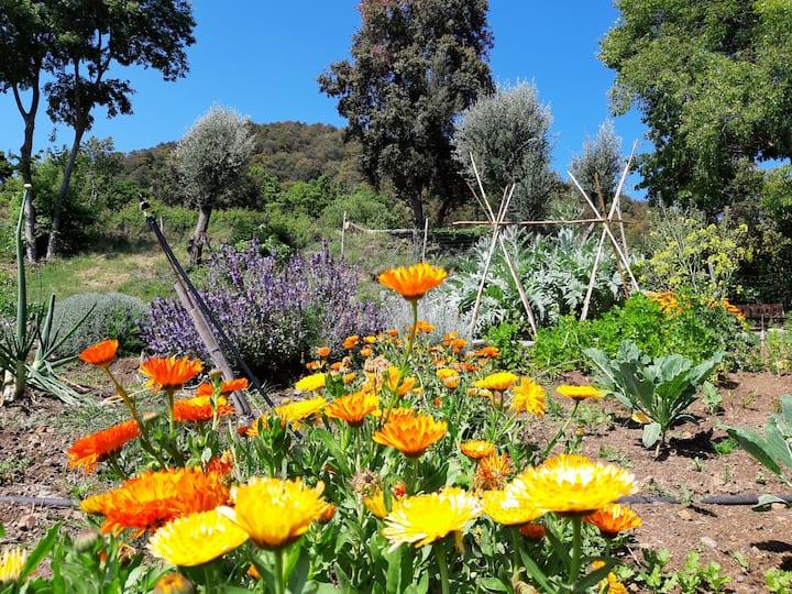 All organic flower and vegetable garden