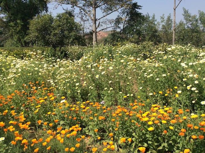 ORGANIC FARM STAY near Delhi & Gurgaon