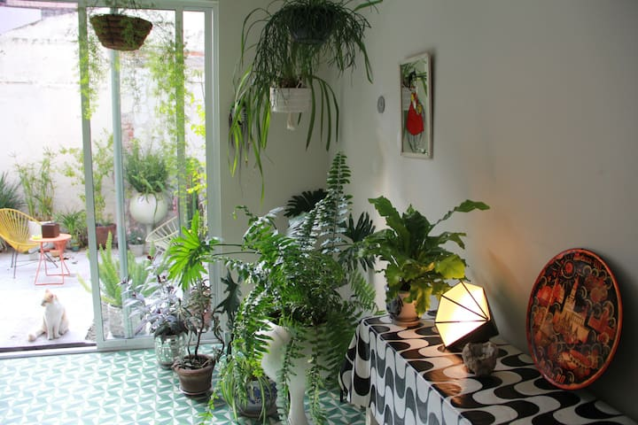 Green & cozy oasis at city rooftop - Mexico City - House