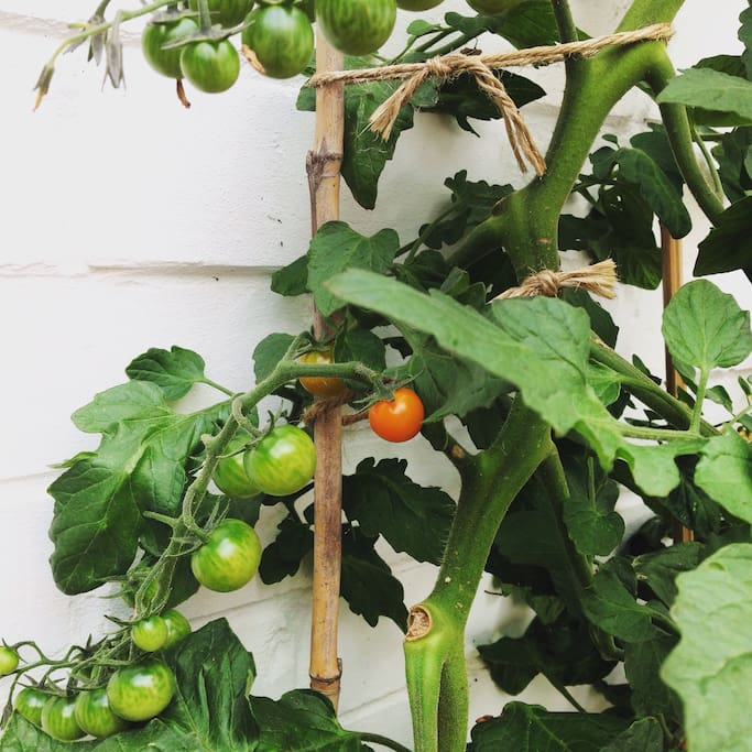 In the summer we grow our own tomatoes in the yard which you're welcome to pick and eat while you're staying.