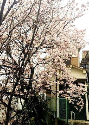 Onfoot ONE Min to Subway Sta. Cherry Blossom HSE.