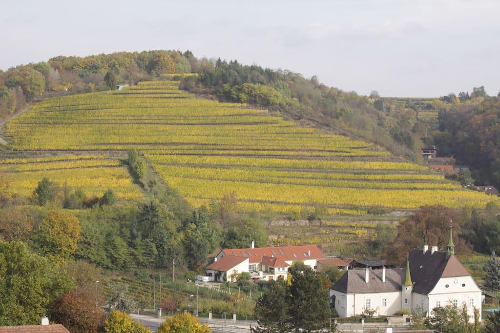Blick auf benachbarten Weinberg
