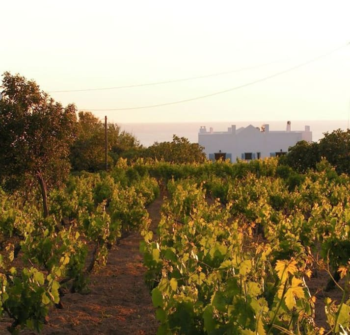 The villa is set in its own vineyard, in a peaceful, rural area - with a couple of excellent tavernas nearby.