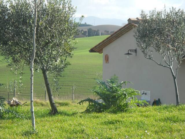 GIORGIA Campagna Toscana Pisa